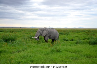 Elefant in swamp of Amboseli National Park Kenya East Africa