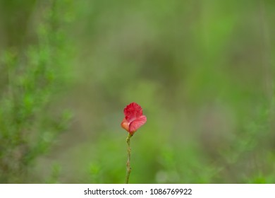 Elegance of red petal flower in natual