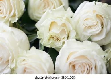 elegant bouquet of white roses