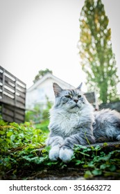 Elegant cat in the garden
