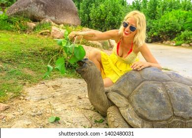 Elegant caucasian happy tourist woman feeding a male of Aldabra Giant Tortoise, Aldabrachelys gigantea, a tortoise native to Aldabra atoll. Popular tourist attraction in La Digue Island, Seychelles.