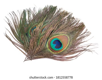 Elegant colorful peacock bird feather isolated on the white