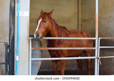 Elegant horse on the Farm.