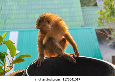 The elegant monkey takes a bath