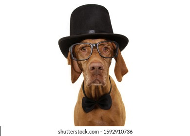 elegant Pet portrait. Pointer dog wearing a black top hat and bowtie. Isolated on white background. carnival or new year party concept