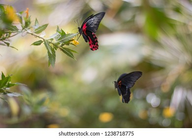 Elegant red and black butterfly.