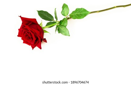 Elegant Red rose flower Top view. Flat lay. Beautiful single red rose flower on stem with leaves isolated on white background. Naturе object for design to Valentines Day, mothers day, anniversary
