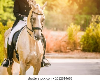 Elegant rider woman and cremello horse. Beautiful girl at advanced dressage test on equestrian competition. Professional female horse rider, equine theme. Saddle, bridle, boots and other details.