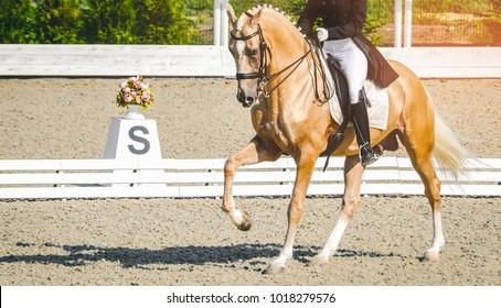 Equine Veterinarian Career Profile and Duties