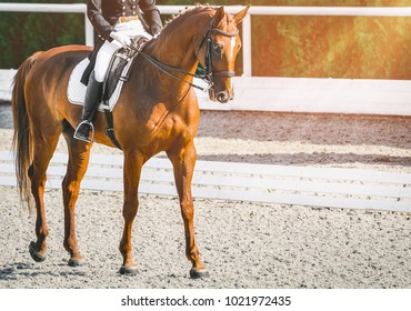 Elegant rider woman and sorrel horse. Beautiful girl at advanced dressage test on equestrian competition. Professional female horse rider, equine theme. Saddle, bridle, boots and other details.
