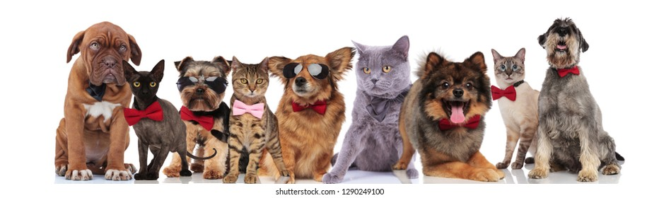 elegant team of nine adorable pets with bowties standing, sitting and lying on white background