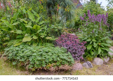 Elements of garden: decorative bushes and plants