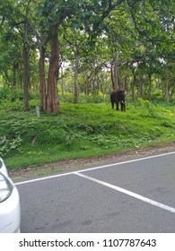 elepant at mudhumalai tiger reserve