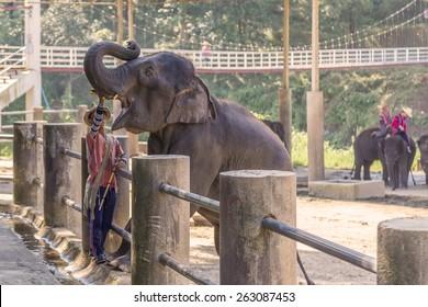 Elepant in show.Chiang Mai,Tailand