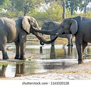 Elepants at the river