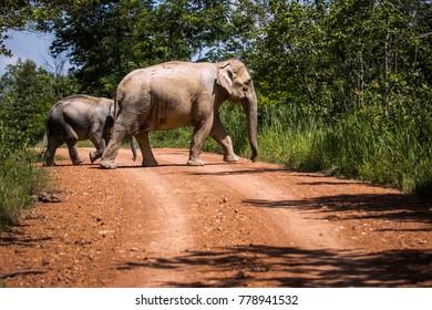 elephan family wild life in Kuiburi national park.
