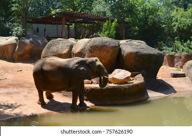 An elephan in the river drinking water