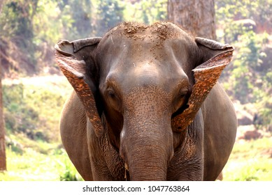 Elephan sad in asia