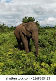 Elephan walking in a safari.