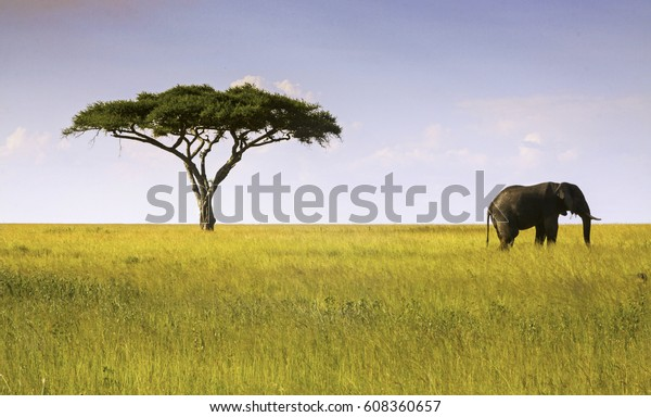 Elephant and Acacia Tree Landscape in Serengeti National Park, Tanzania, Africa