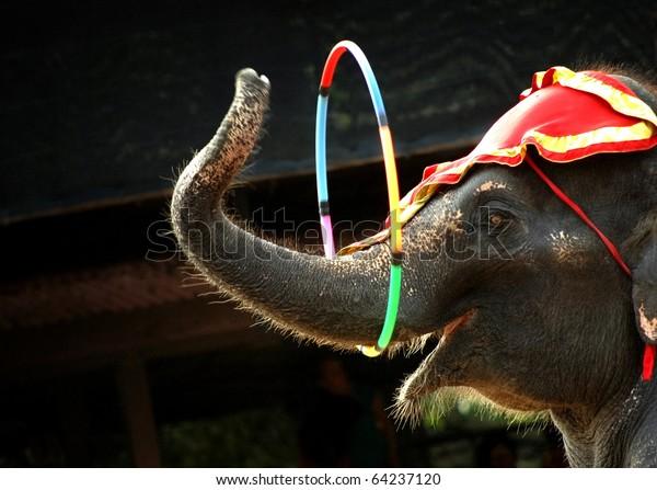 acte d'éléphant
