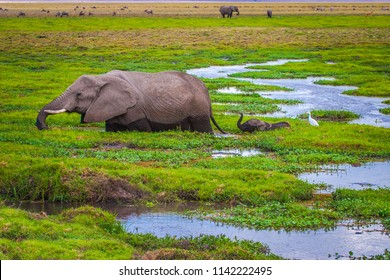 Elephant with an elephant. Africa. Kenya. Journey through Africa. African elephant goes through the swamp. Animals in Kenya. Safari in the national park. An elephant at Mount Kilimanjaro.