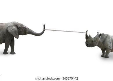 Elephant against rhinoceros with rope pulling, competition concept, isolated on white background, .
