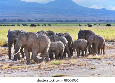 ELEPHANT AT Amboseli National Park, formerly Maasai Amboseli Game Reserve, is in Kajiado District, Rift Valley Province in Kenya. The ecosystem that spreads across the Kenya-Tanzania border.