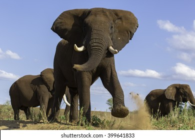 Elephant Anger