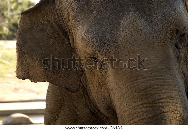 Elephant in Australia