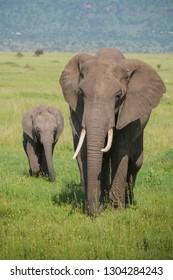 Elephant and baby on the savanna