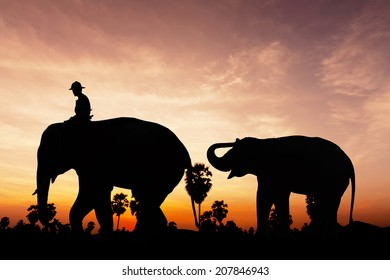 Elephant and baby on twilight time in Thailand Asia