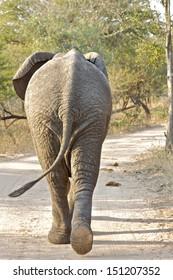 Elephant Backside