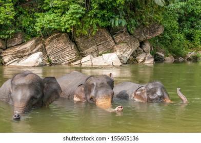 Elephant Bath in River