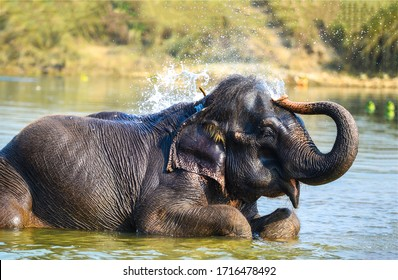 Elephant bathes in the river
