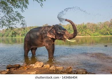 Elephant bathing, Kerala, India