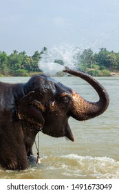 Elephant bathing in the morning in Tungabhadra river, Hampi, Karnataka, India