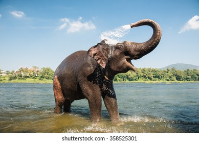 Elephant bathing on southern banks of the periyar river at Kodanad training center, Kerala, India