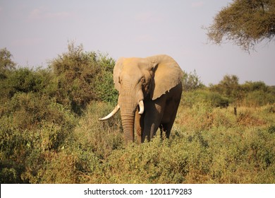 Elephant between green bushes