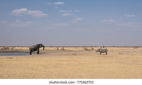 An Elephant and a Black Rhino meet at a watering hole in Namibia