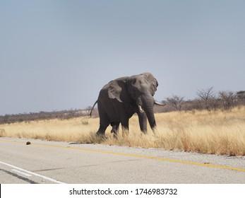 Elephant Bull next to Transkalahari Highway, Botswana - Shutterstock ID 1746983732