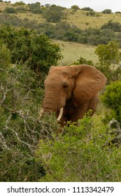 Elephant busy lifting a branch in the field