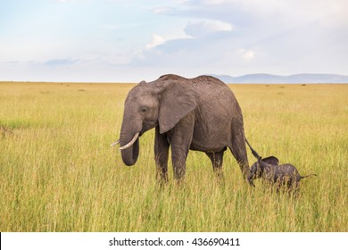 Elephant calf with his mother in savannah
