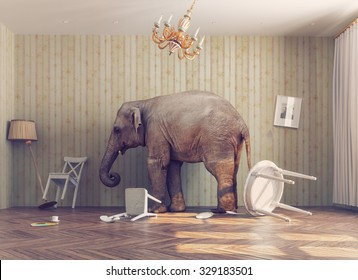 a elephant calm in a room. photo combination concept