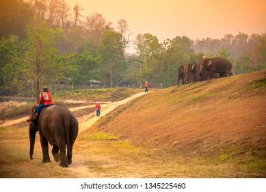 Elephant caretaker in Thai Elephant Conservation Center Lampang thailand.