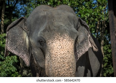 Elephant, close up