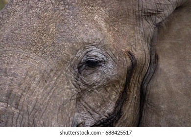 elephant close up in the mara