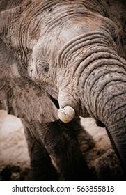 Elephant closeup, Etosha National Park, Namibia