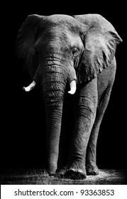 Elephant with Dark Background