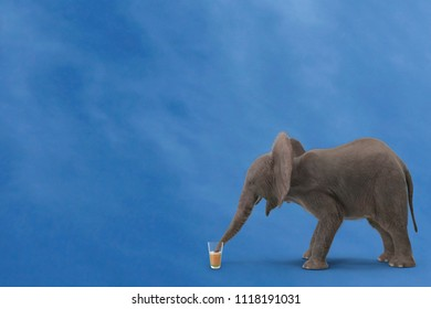 elephant drinking from glass